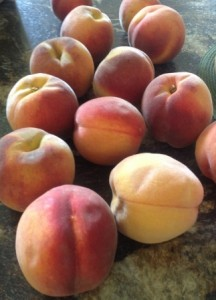 Twenty pounds of hand-picked tree-ripened peaches
