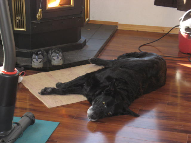 Moose in front of stove.