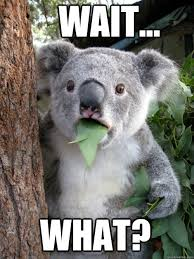 "Koala captioned ""Wait, what?"""